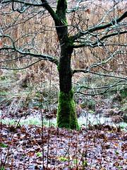 Baum (Luna-1) Tags: winter spaziergang auetal
