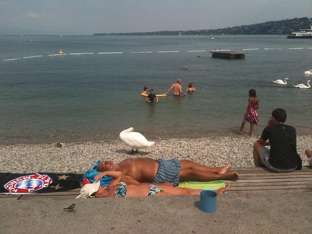View Geneva →