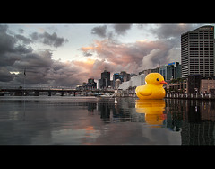 Plucka (AnthonyGinmanPhotography) Tags: giant duck artwork rubber darlingharbour bobbing giantduck florentijn sydneyfestival hofmans