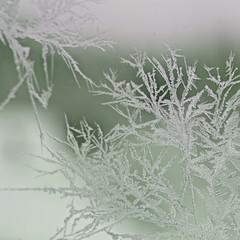 Icy window (Ajaton) Tags: winter ice window suomi finland crystal freezing talvi cristal haukipudas