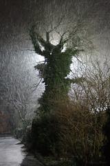 Snow at Stade (Alesa Dam) Tags: winter snow tree backlight backlit stade kortrijk contestwinner thepinnaclehof kanchenjungachallengewinner favescontest19f20130124 tphofweek195 thepinnacle20130326