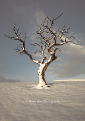 Standing In Snow (.Brian Kerr Photography.) Tags: winter snow tree landscape cumbria thepowerofnow xmascomp15