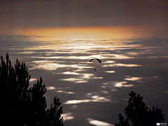 Roquebrune (Daniel Wildi Photography) Tags: trees light sea sky seascape france sports nature sunrise reflections fly flying flight monaco paragliding paraglider roquebrune 2013 danielwildiphotography