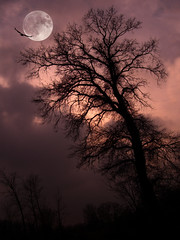 CIMG1732 moonlight shadows (pinktigger) Tags: winter moon tree bird night shadows moonlight naturesfinest vigilantphotographersunite vpu2 vpu3 vpu4 vpu5 vpu6 vpu7 vpu8 vpu9 vpu10