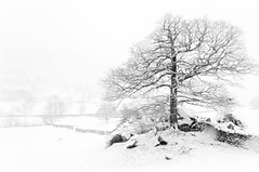 Winter Tree (hoopsci) Tags: uk travel trees winter wild england sky white mountain lake snow mountains cold tree english ice field silhouette rock stone wall rural walking landscape climb countryside frozen nationalpark nikon europe quiet escape britain hiking farm district great farming lakes lakedistrict scenic deep dramatic peaceful calm hills valley cumbria fells fields bleak serene highkey walls pike heavy lakeland tranquil rugged langdale wintry crag stickle unspoilt d5000
