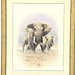 22. Limited Edition Artist Signed Elephant Print