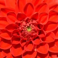 Grten der Welt (Gardens of the World) (Bjrn O) Tags: grten garten garden botanik pflanze pflanzen plant plants flower flowers blume blumen rot red blhen blte blossom blten