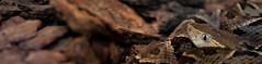PNNU-3 (ISAAC IBAEZ) Tags: snake serpiente culebra