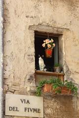 (B Plessi) Tags: gatto cat chat visso marche sibillini italia