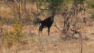 Namibia Dangerous Game Safari - Caprivi Strip 45