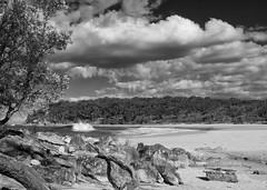 Driftwood (OzzRod) Tags: pentax k5 supertakumar28mmf35 pentaxsingleinaugust2016 monochrome blackandwhite stitch panorama coast seascape beach driftwood sky clouds barraggabay