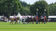 Guards Polo Club Aug 2016 08 (Timelapsed) Tags: sport ourdoors horseback hourse windsor windsorgreatpark