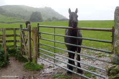 e keswick horse (Simon -n- Kathy) Tags: keswick england lakedistrict lakelands hike rain walk castlerigg