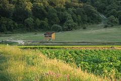 trakya'da bir serender (zeynepyil) Tags: pky edirne turkey tarlalar fields field agriculture tarm serender trakya