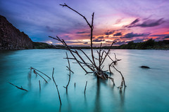 The Fallen Tree (Pentax Gareth) Tags: landscape waterscape water tree dead longexposure quarry lake art fineart outdoor hitech color colour pentax k3ii