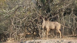 Namibia Dangerous Game Safari - Caprivi Strip 67
