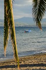 Boat between palm leaves (kutruvis nick) Tags: greece greek hellas evia chalkis eretria sea water sand mountains beach boat palmleaves between sky clouds nik kutruvis nikon d5100