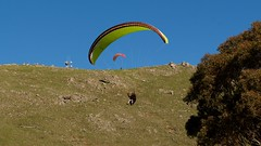 Al on final1 (overflow50) Tags: paragliding paraglider canberra springhill spring australia sky clouds