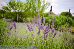 PLW_5567 (Laszlo Perger) Tags: wien vienna sterreich austria blumengarten hirschstetten flowergarden