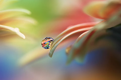 Details (Marilena Fattore) Tags: macro artistic tamron water drops fantasy nature closeup focus petals floralart reflections details pastel orange green blue delicate softness flower garden canon 90mm waterdrops
