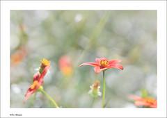 Red Flowers (valerie.champion) Tags: flower flowers fleurs red rouge nature flore jardin des plantes paris france macro