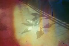 #352 ([ iany trisuzzi ]) Tags: brazil film animal brasil analog 35mm sãopaulo pigeons lightleak sp olympustrip35 project365 fujifilmsuperiaxtra400 365days filmsoup