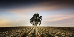 tree (richard carter...) Tags: sunset tree kent solitude lonetree canoneos5dmk2
