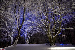 Snowy and Bluey (bent inge) Tags: blue trees winter snow norway forest stavanger norge snowy 2012 rogaland vland vlandskogen bentingeask askphoto