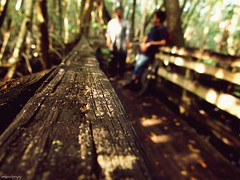 4 (nmephotography12) Tags: park wood 2 texture closeup outside photography guys testing boardwalk manualmode 2guys