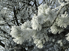 """Frozen Tree • <a style=""""font-size:0.8em;"""" href=""""http://www.flickr.com/photos/44019124@N04/8309944485/"""" target=""""_blank"""">View on Flickr</a>"""