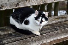 Pause (Godwi_) Tags: cats bank katze pause miau ktzchen ausruhen miez ruhebank