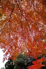2012_1130_DP2M_SDIM2211 (azure dora) Tags: autumn japan sigma 2012 dp2merrill