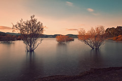 The Power of Silence (Allard One) Tags: longexposure trees winter sunset seascape nature water beautiful vintage landscape crossprocessed spain nikon december lakedistrict surreal andalucia reservoir le crossprocessing vista andalusia malaga 30s ardales spanje 2012 waterscape f20 embalsedelcondedeguadalhorce treesinwater nd110 andalucie filterstack d700 bwnd110 nikond700 nikkor2470mmf28 filterstacking nikonfx allardone allard1 fullframepower nikcolorefexpro4 allardschagercom