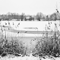 (imagepoetry) Tags: winter blackandwhite lake snow cold ice season landscape europe january waterscape iphone imagepoetry vsco iphonephotography iphone4s uploaded:by=flickrmobile flickriosapp:filter=nofilter