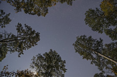 Starry Night (triggzBb) Tags: trees light sky usa nature night stars photography woods nikon texas huntsville comets huntsvillestatepark d7000