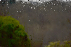 Day 4 - Rain for a Change (Victoria Richards) Tags: sky mountains cold window wet water rain weather wales dark moody foliage valley 365 damp valleys odc porject365 ourdailychallenge odc3