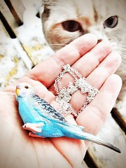 ztina and the budgie (piaktw) Tags: blue cat necklace kitten hand jewellery budgie sniffing britishshorthair inspecting colourpoint ztina luddkolts bluetortietabby ztinasezincote