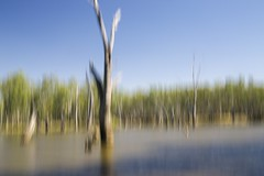 Ovens River (Dirk Wallace) Tags: blue abstract tree green art water grass river sony australia bluesky victoria bark icm rutherglen yarrawonga ovensriver a850 bundalong intentionalcameramovement