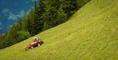 zillertal_069  Das Leben als Bergbauer (wenzelfickert) Tags: mountains forest landscape austria tirol sterreich landwirtschaft meadow wiese berge bauer landschaft wald zillertal bergwiese bergbauer zillertaleralpen bergtraktor mhtraktor umgmayrhofen heuerwender