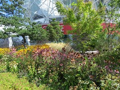 The green roof at Science World (Ruth and Dave) Tags: greenroof scienceworld vancouver trees roof pine echinacea coneflower rudbeckia blackeyedsusan