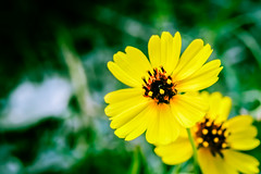 BlancoRiver_105 (allen ramlow) Tags: river flower bank nature sony a6300 summer flowers