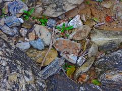 Flotsam and jetsam (elphweb) Tags: flotsandjetsam rocks leaves plants sand sticks australia falsehdr fhdr
