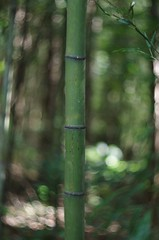 Bambusoides (bamboosage) Tags: helios 402 1585 preset m42 russia