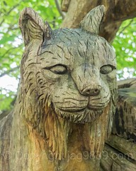 Luchs Wood Sculpture, Emmen, Lucerne, Switzerland (jag9889) Tags: sculpture jag9889 reuss lynx 20160727 wood publicart centralswitzerland switzerland emmen outdoor 2016 europe igemmenimwald cantonlucerne alpine art artist ch carver figurenweg forest foresttrail helvetia holz holzskulpturenweg innerschweiz interessengemeinschaft kantonluzern lu landscape lucerne luzern reussuferweg riverbank schnitzer schweiz skulptur skulpturenweg streetart suisse suiza suizra svizzera swiss woodcarver zentralschweiz