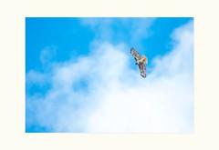 Quick, quick, big bird in the sky (Krasne oci) Tags: birdinflight bird bluesky sky flying freedom evabartos artphotography photoart nature canon5dmarkiii flickr
