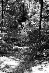 Northern California Woods - BW (rschnaible) Tags: california northern us usa west western outdoor sightseeing landscape woods forest bw black white photography monotone