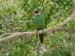 P2230249 (Gareth's Pix) Tags: aviarionacionaldecolombia baru colombia aviario bird