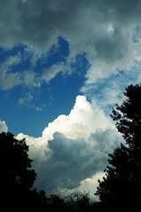 Mountain In The Sky (Sassy Unicorn Photography) Tags: clouds cloud fluffy before storm trees frame silhouette