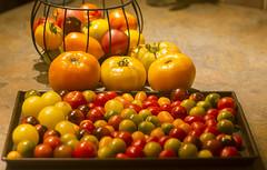 All Shapes & Sizes (rumimume) Tags: potd rumimume 2016 niagara ontario canada photo canon 550d t2i sigmasummer tomato fruit plant garden food fresh harvest heirloom