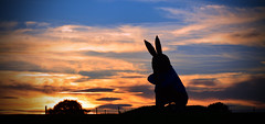 End of another day for Peter Rabbit. (lwts2000) Tags: peter rabbit sunset surreal sun red orange clouds beauty